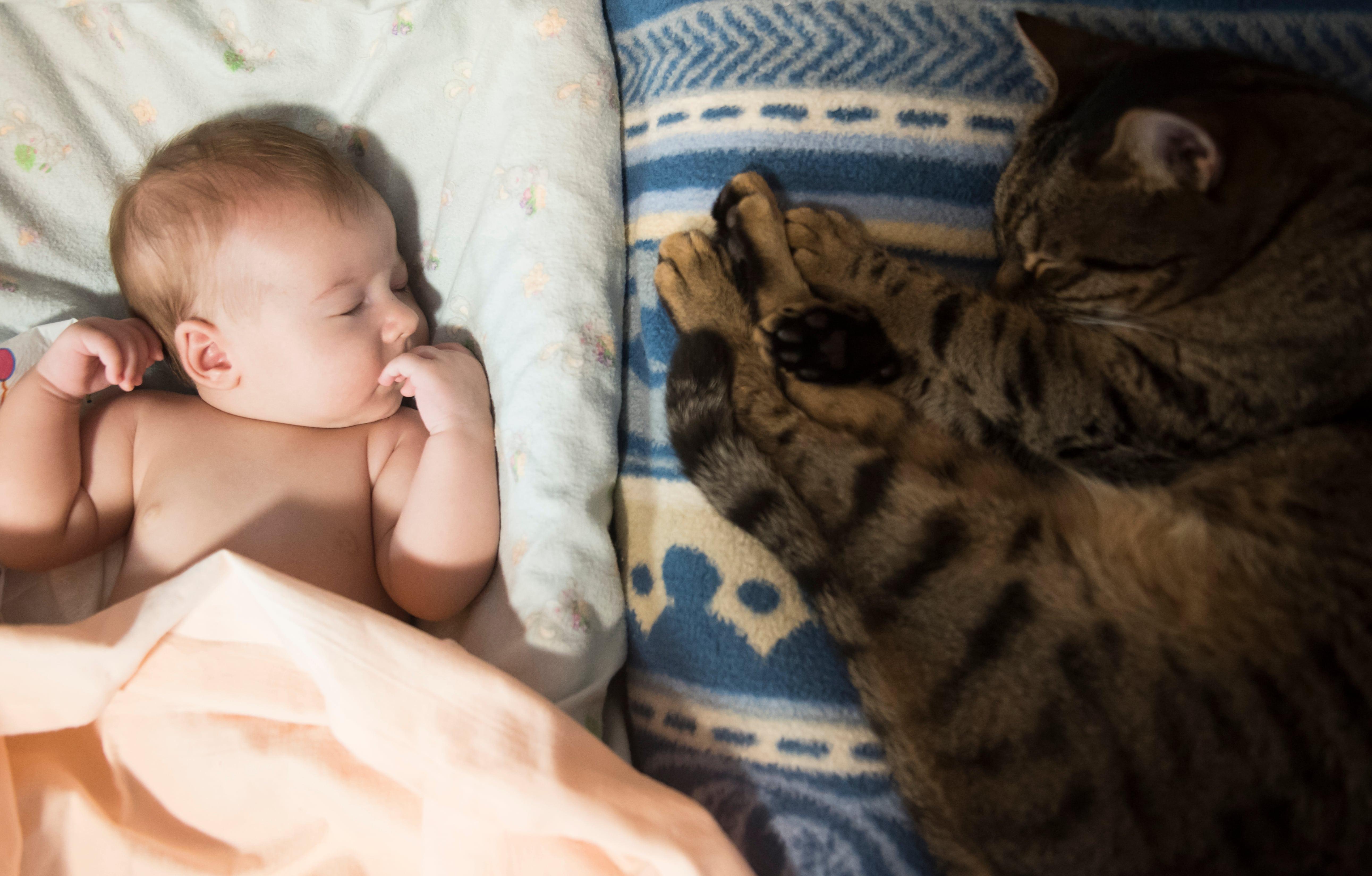 Gravidez e gatos